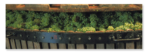 The wine-making process - Champagne lignier Moreau